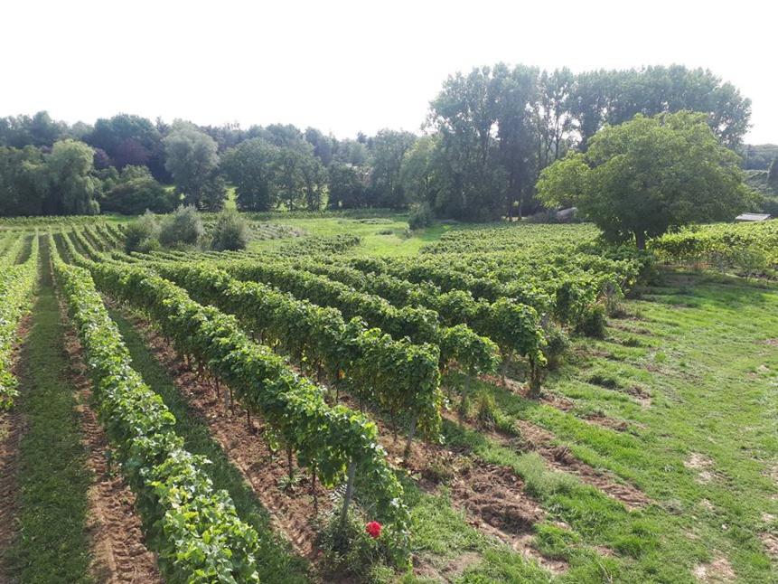Apéro du début des vendanges au cœur des vignes (Nivelles)