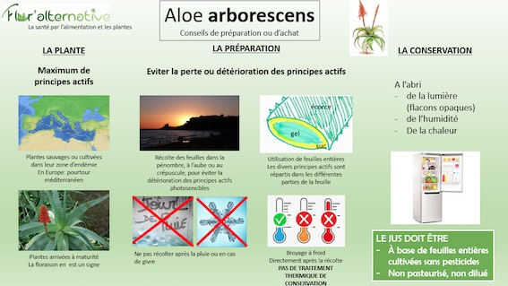 Flor'alternative : Les vertus de l'aloé arborescens