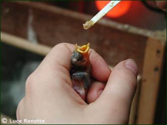 Birds bay | Que faire si vous trouvez un animal blessé ?