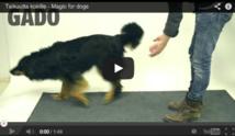 Réactions de chiens face à la magie !