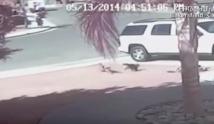 Vidéo BUZZ ! Un chat sauve un enfant d'une attaque de chien !