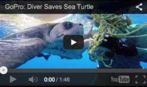 Incroyable vidéo d'une tortue de mer et d'un plongeur !