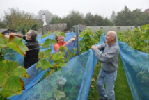 Le vignoble de Genval porte ses fruits !