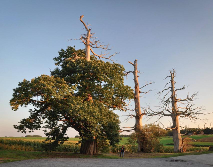 Concours, votez pour l'arbre de l'année 2016 !