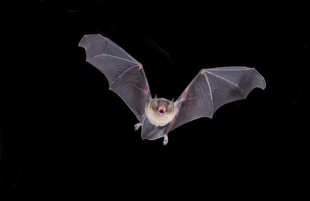 Nivelles : Les nuits de la chauve-souris