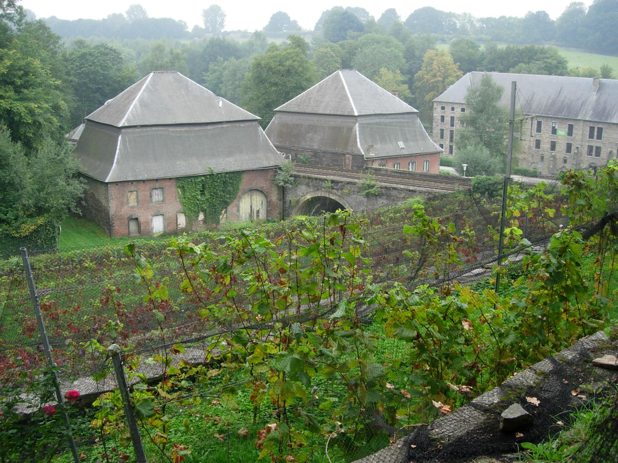 Villers-la-Ville : Visite guidée du Vignoble de l'Abbaye