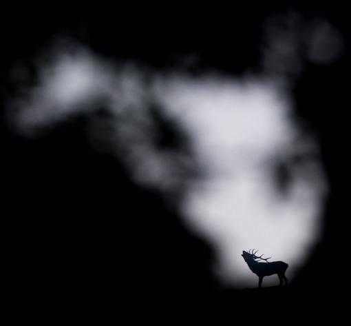 Michel d'Oultremont, photographe passionné de nature!