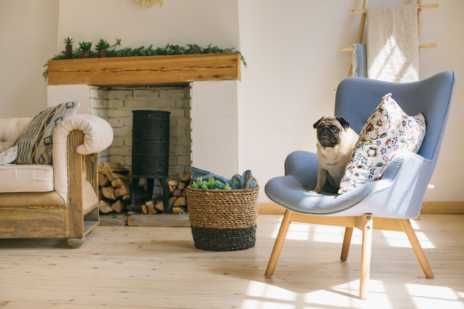 Dog Sitting en Brabant wallon : The Pet Company