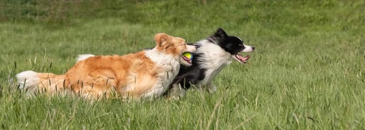 Un Educateur canin ? Ou plutôt un Comportementaliste canin ? Et sur Genappe ? Phaedra Juniors Academy !