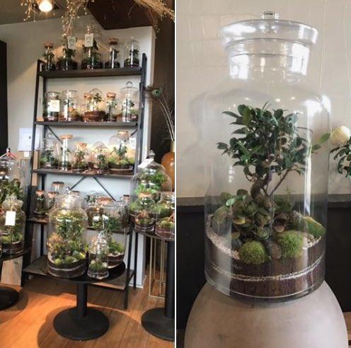 La Fleurerie : Une fabrique de rêve en Brabant wallon (Fleuriste et livraison de fleurs, plantes, déco, terrariums)