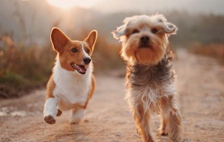 Une nouvelle aire de jeux pour chiens au Château d'Hélécine