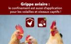 LA GRIPPE AVIAIRE EST ARRIVÉE EN BELGIQUE : PROTÉGEZ VOS VOLAILLES !