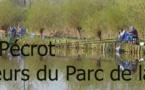 Etang de Pécrot - Pêche à Grez-Doiceau
