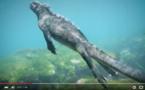 Incroyable Iguane en plongée ! A voir absolument !