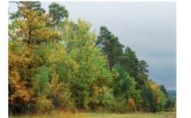 Qui veut brader la forêt wallonne ?