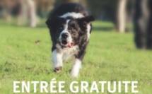 Journée du chien au Domaine provincial d'Hélécine
