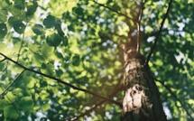 Important : Subventions à la plantation de haies, vergers et arbres en Wallonie.