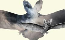 Nivelles : Nuit de la chauve-souris