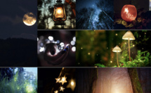 Lanterna Magica, la Forêt Enchantée au Châteua de la Hulpe